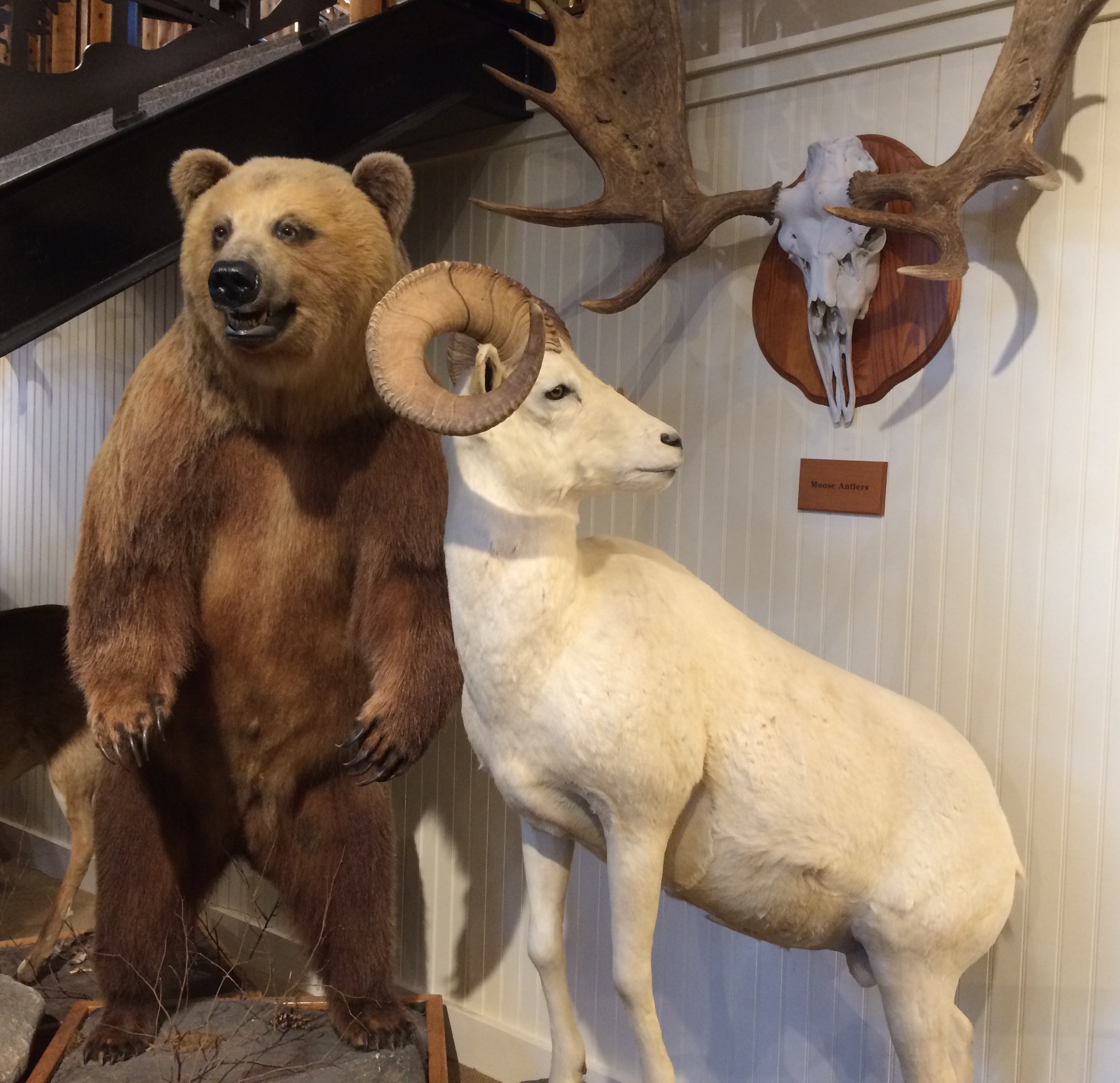 Diorama with bear