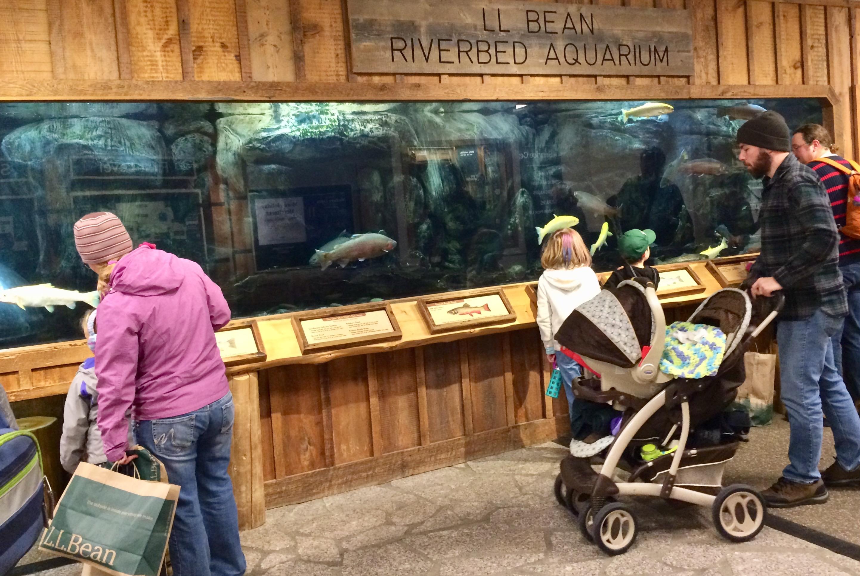 L.L. Bean aquarium