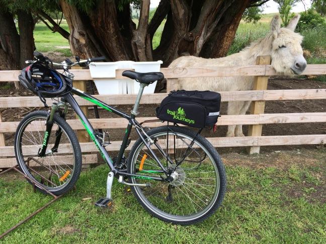 Bike and donkey in New Zeland